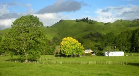 По Новой Зеландии на велосипеде.