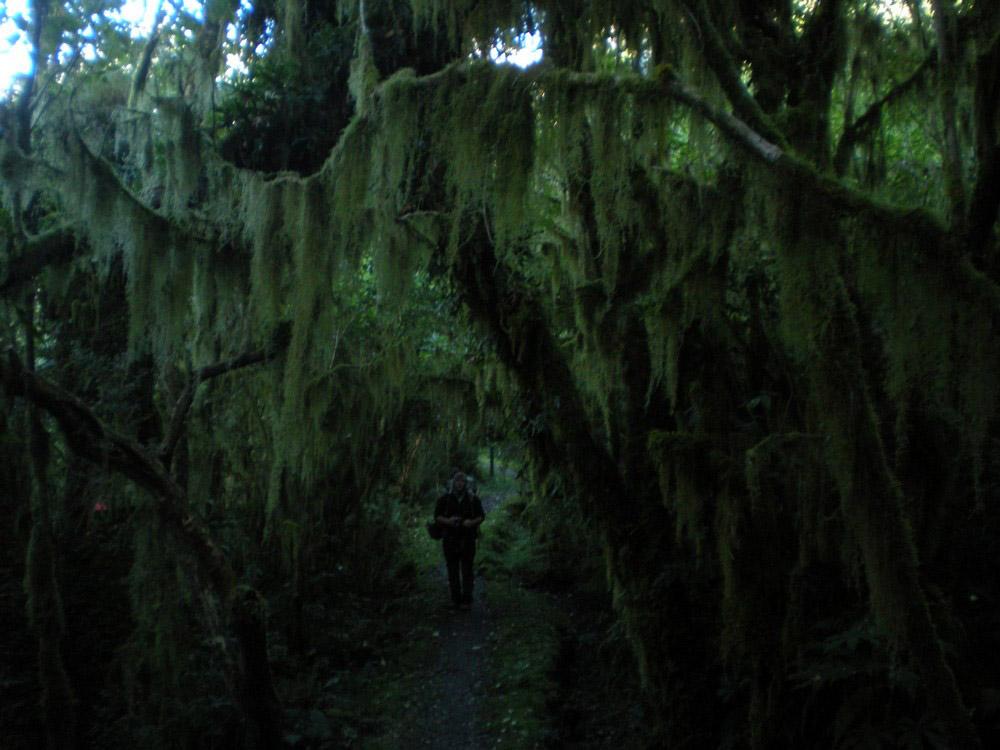 влажный лес