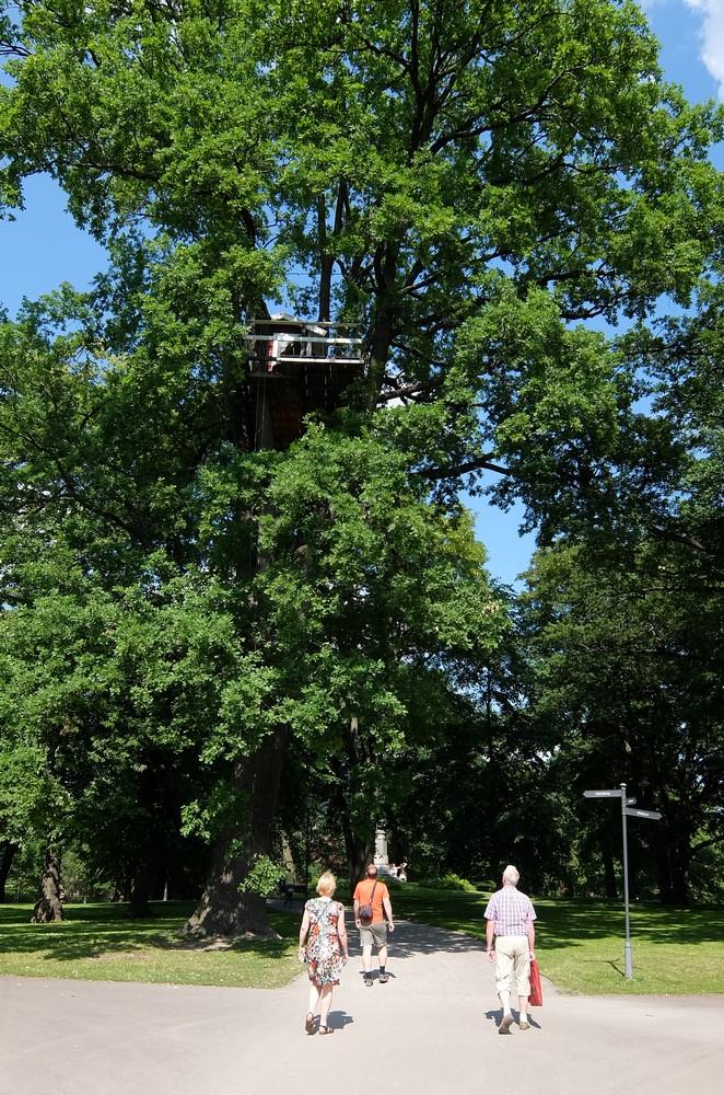 необычная гостиница на дереве. Вестерос, Швеция