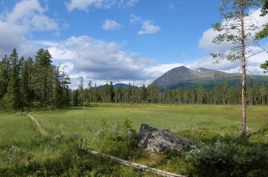 север Швеции природа